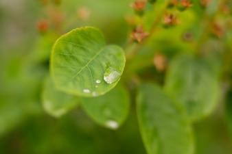 Goutte de pluie sur la feuille