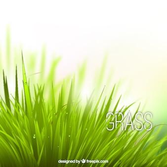 Réaliste herbe
