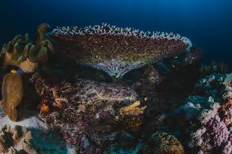 Récif corallien avec des coraux ramifiés et des poissons tropicaux colorés