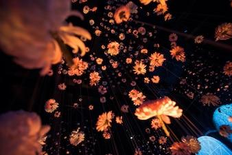 Regardez par le bas dans de beaux chrysanthèmes accrochés aux fils dans la pièce noire