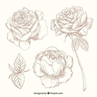 roses dessinés à la main