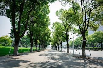 Rue avec des arbres
