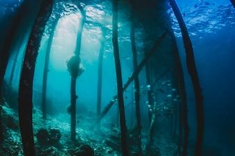 Ruines sous la mer