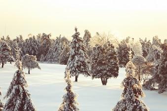 Scène blanche hiver