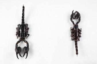 scorpion noir paire