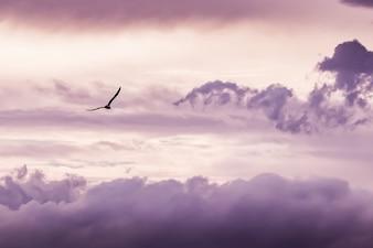 Seagull volant avec des nuages de fond