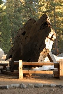 section séquoia croix dans nationa séquoia, le général