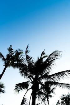 Sillhouette palmiers