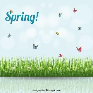 Spring background avec une prairie