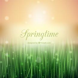 Springtime fond dans le style de bokeh