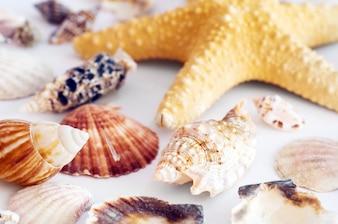Starfish et des coquillages
