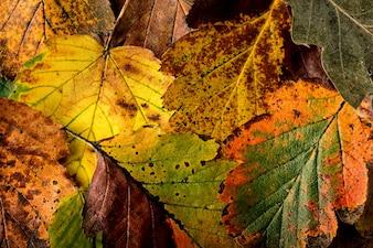 Texture de feuilles colorées