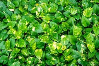 Texture des feuilles des plantes