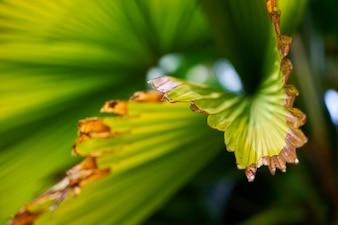 Texture leaves closeup vert