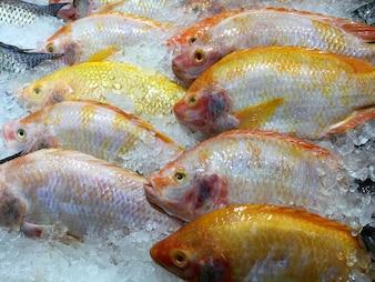 Tilapia du Nil jaune congelé Pêcher dans un tas de glace