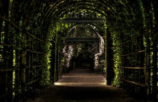 Tunel de la vigne