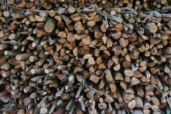 Une pile d'arbres coupés. Pile de stockage de bûches en bois pour l'industrie.