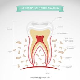 Vecteur de dentiste infographie