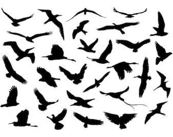 vecteur stock oiseaux volants