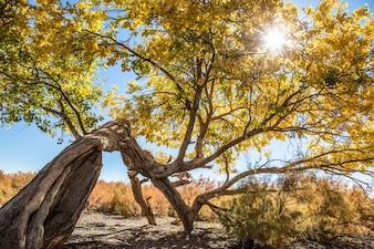 Vieil arbre dans un paysage ensoleillé