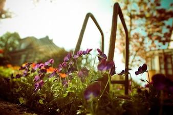 Fleurs violets ci-dessous
