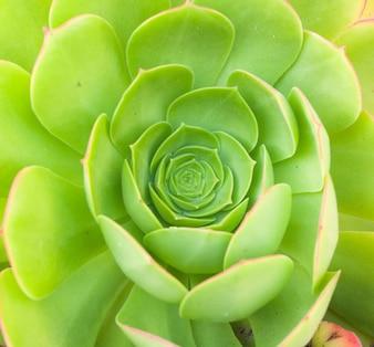 Vitalité du jardin beauté texture ornementale