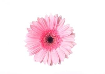Vue de dessus fleur rose avec des gouttes