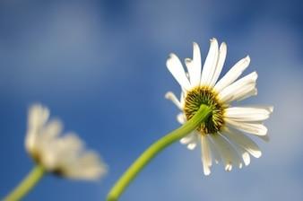 Fleur blanche contre le ciel bleu