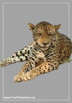 Quiet leopardo psd