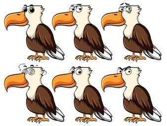 Aigle avec différentes expressions faciales