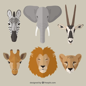 Animaux africains