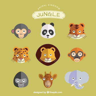 Animaux de la jungle fixés