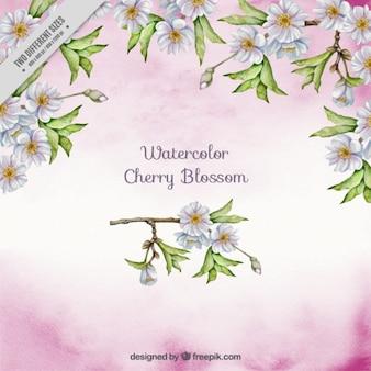 Aquarelle Cherry Blossom Contexte