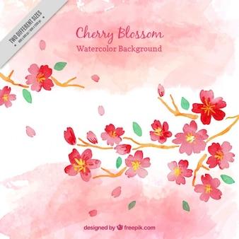 Aquarelle fleur de cerisier fond