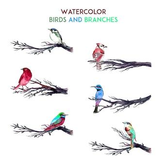 Aquarelle, oiseaux et branches