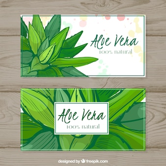 Bannières Aquarelle Aloe Vera