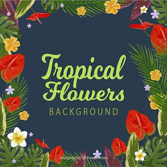 Cadre de fond avec des fleurs tropicales