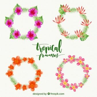 Cadres d'aquarelle à fleurs tropicales