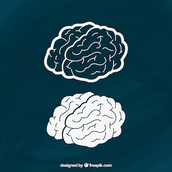 Cerveaux dessinés à la main