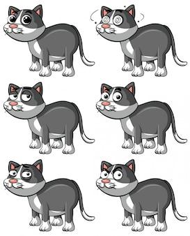 Chat gris avec différentes expressions faciales