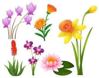 Clipart vert, tropique, sentier, botanique