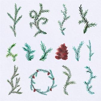 Collection aquarelle feuilles