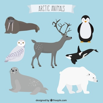 Collection d'animaux artic