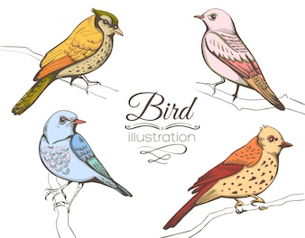 Collection d'illustration d'oiseaux