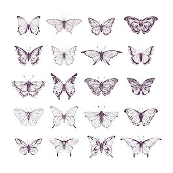 Collection d'illustration papillon