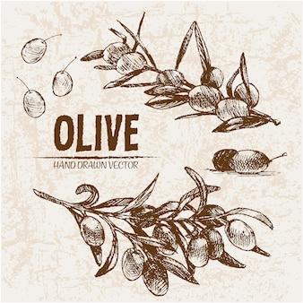 Collection d'olives dessinées à la main