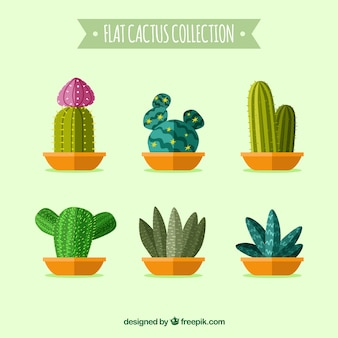 Collection de cactus plat
