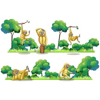 Collection de dessins de singe