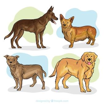 Collection de la main aquarelle tiré par des chiens