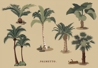Collection de palmiers